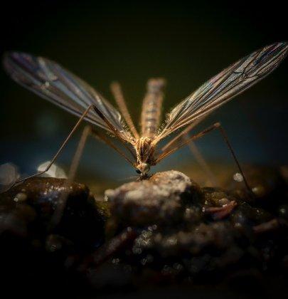Anti-moustiques : comment protéger bébé ? Le classement !